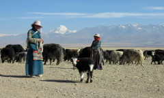 Chorten Kailash yaks 108 - p