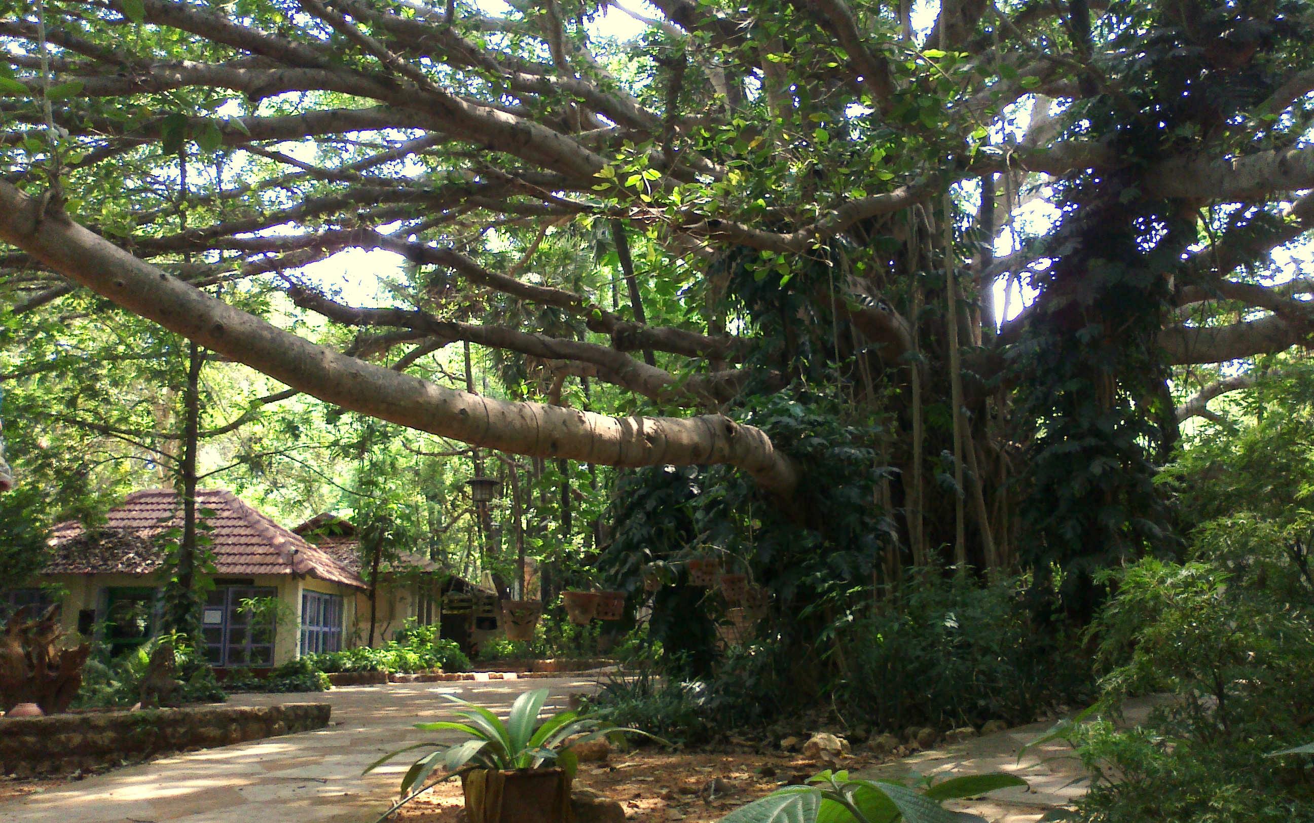 Auroville e Pondicherry