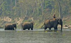 chorten-chitwan-4